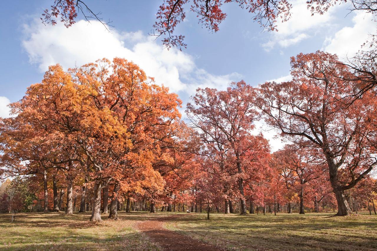 Magnificent Oaks 3, Illinois