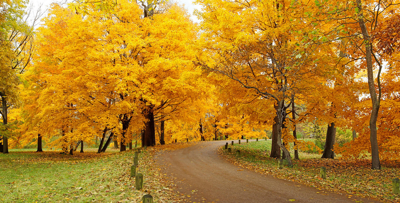 Fall panorama, Morton Arboretum, Illinois