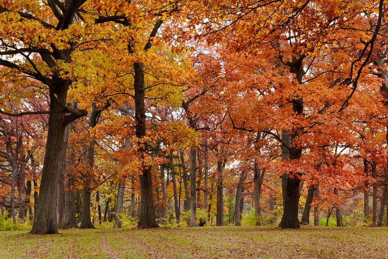 Magnificent Oaks 4, Illinois