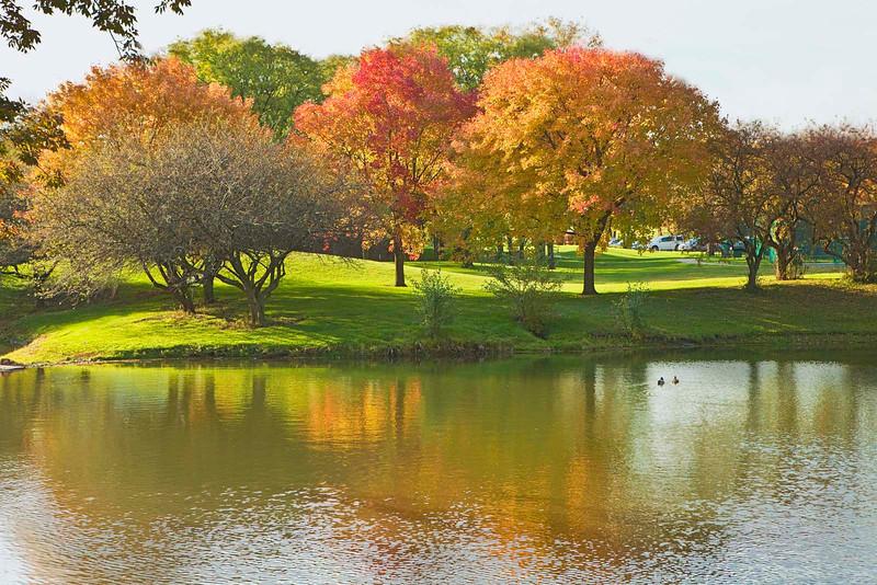 Colorful fall trees, OakBrook, Illinois