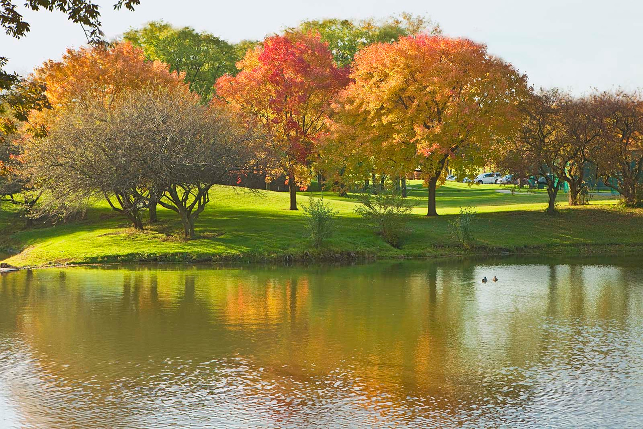 Colorful fall trees, OakBrook, Illinois