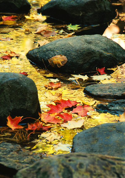 Gems of the fall, Mathiessen State Park, Illinois