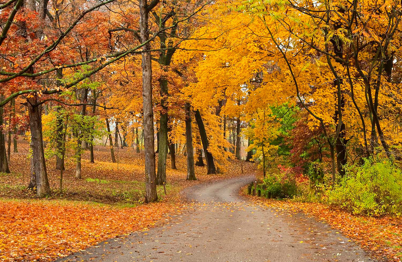 Fall at Morton Arboretum, Illinois