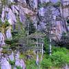 Pine tree on cliff II