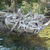 Root Labyrinth I
