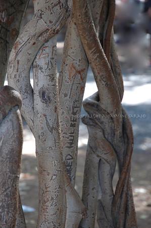 'Hulbert' on roots