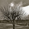 Apple tree in winter, Farm<br /> Limited edition