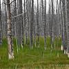 Calcified trees II
