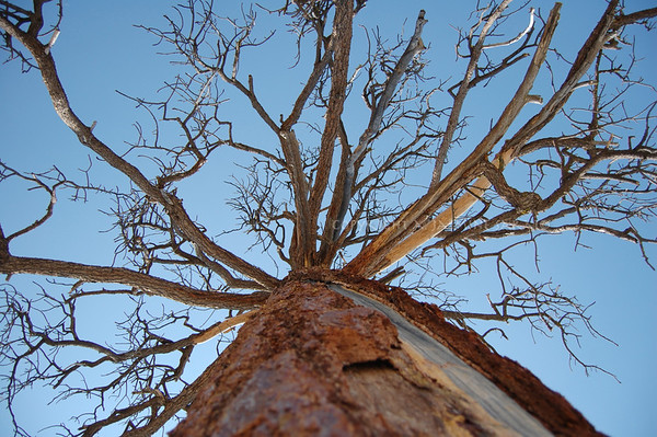 Reaching out! Yosemite; 2008 Limited Edition
