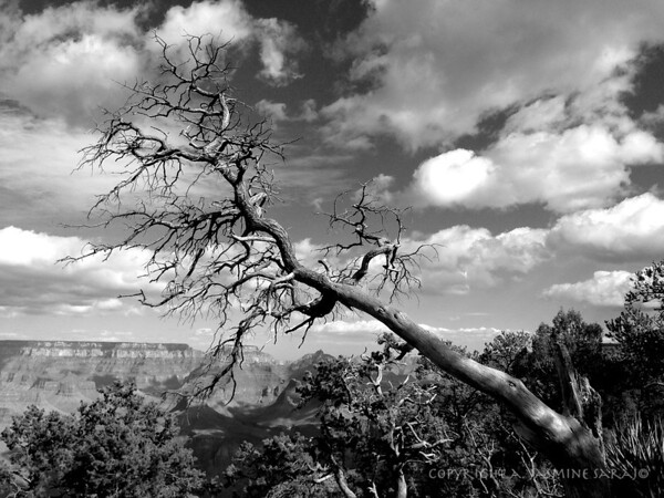 Reaching over canyon II BW