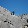 Tree grows  in Rock Mountain