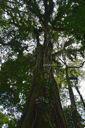 Among the Cloud Forest III