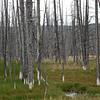 Calcified trees III