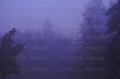 Trees_Foggy_Morning