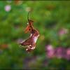 Falling Leaf 2