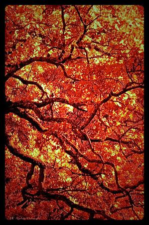 Trees IR Vert