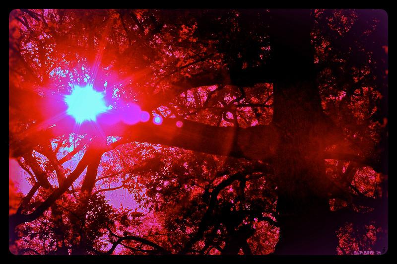 Trees_IR_4