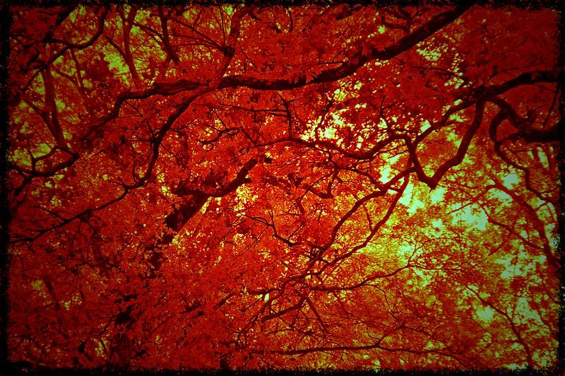 Trees_IR_5