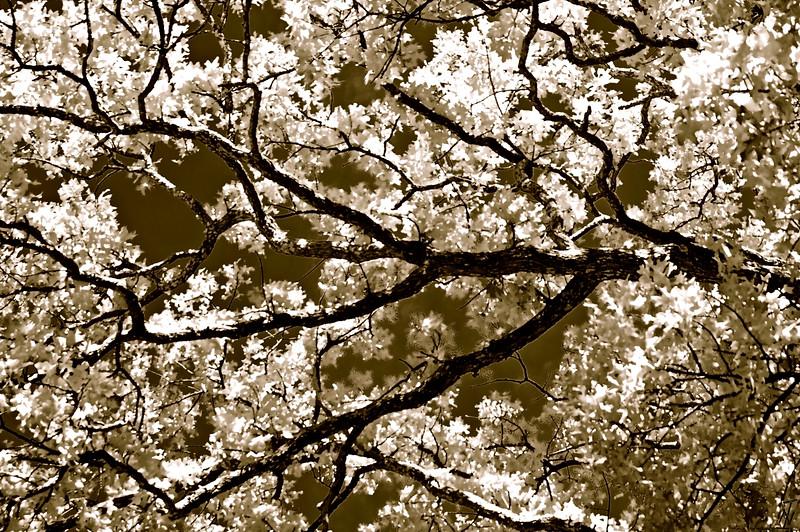 Trees_IR_1