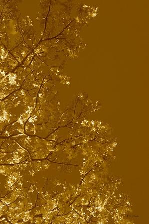 Tree IR 2