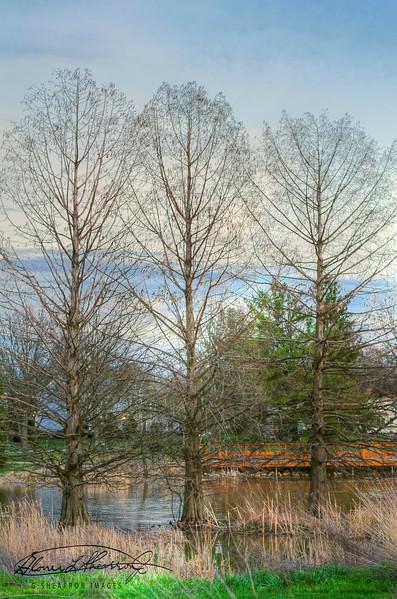 Three Trees @ Highland Park