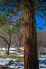 5D 1235 Yosemite National Park, California using Photomatix HDR technique.