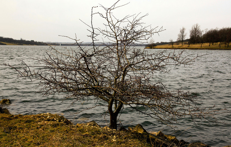 Tree at Rutland Water
