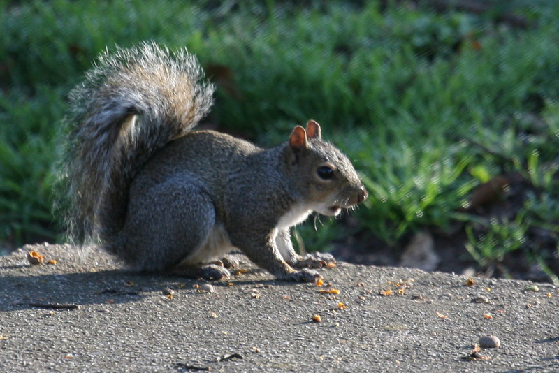 I'm just a squirrel, trying to get a nut.