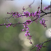 The 400mm top-end of the zoom gives this nice depth-of-field effect on the tree flowers.