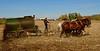 Amish boy spreading manure on his farm near the park.