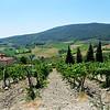 Tuscany Winery in Italy 9