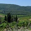 Tuscany Italy Winery 10
