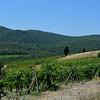 Tuscany Italy Winery 14