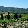 Tuscany Winery in Italy 10