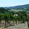 Tuscany Winery in Italy 4