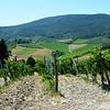 Tuscany Winery in Italy 5