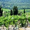 Tuscany Winery in Italy 6