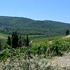 Tuscany Italy Winery 15