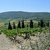 Tuscany Italy Winery 12