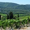 Tuscany Winery in Italy 7