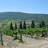 Tuscany Italy Winery 4