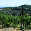 Tuscany Winery in Italy 3