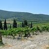 Tuscany Italy Winery 5