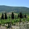 Tuscany Italy Winery 11