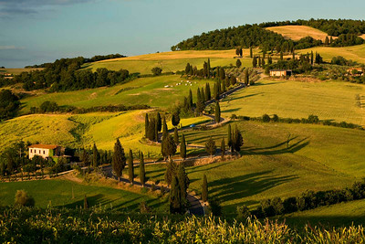 Tuscan hillside with cypresses