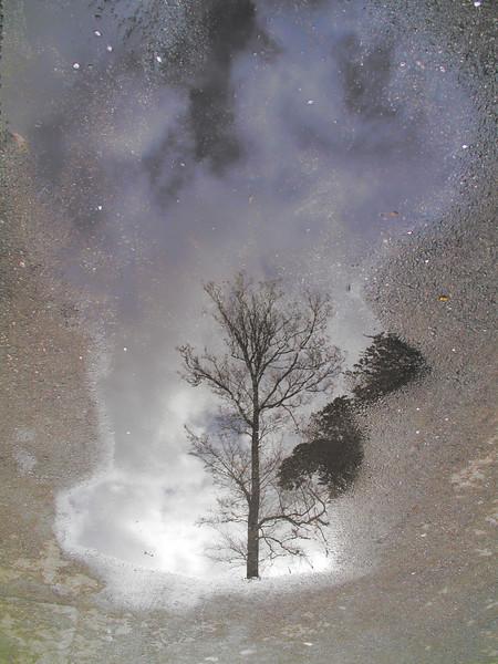 Tree Reflection, Golden Gate Park, Winter
