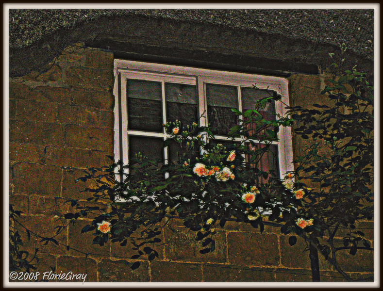 Night Blooms <br /> ©2008 FlorieGray