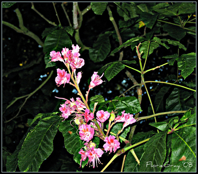 Night Blooming Beauty