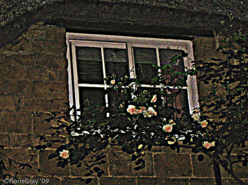 Night Blooms; Wroxton, Oxfordshire, England    <b>Copyright ©2009 Florence T. Gray. This image is protected under International Copyright laws and may not be downloaded, reproduced, copied, transmitted or manipulated without written permission.</b>