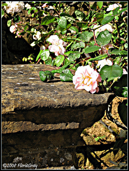 Roses' Rest <br /> ©2008 FlorieGray, Wroxton